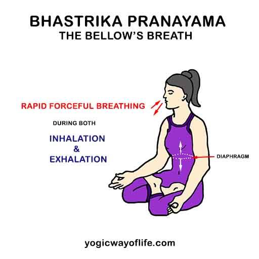 Bhastrika Pranayama - Bellow's Breath - Yogic Breathing