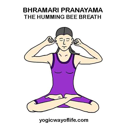 Bhramari_Pranayama_Humming_of_Bee_Yoga