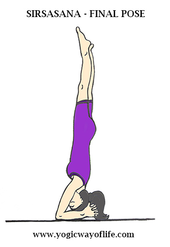 Final_Pose_Sirsasana_Head_Stand_Yoga_Asana