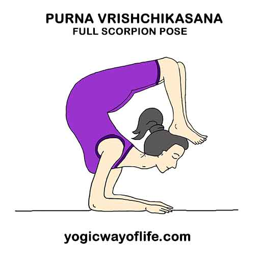 Vrishchikasana Scorpion Pose Yoga Asana Purna Full