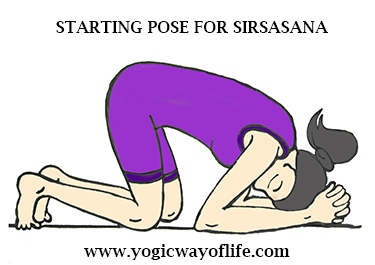 Stage_1_Sirsasana_Head_Stand_Yoga_Pose_Asana