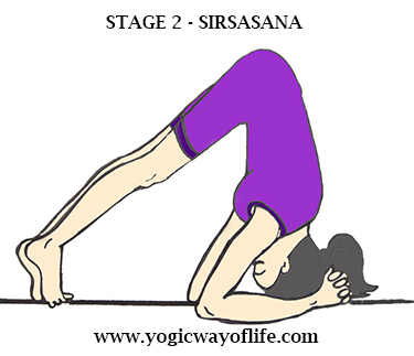 Stage_2_Sirsasana_Head_Stand_Yoga_Pose_Asana