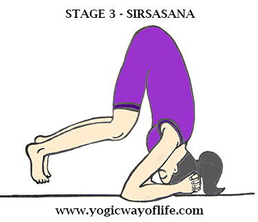 Stage_3_Sirsasana_Head_Stand_Yoga_Pose_Asana