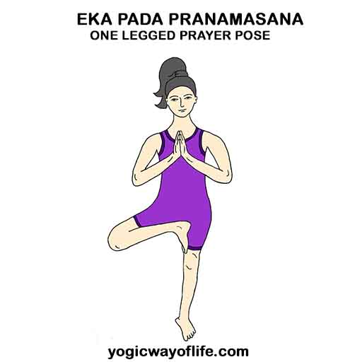 Eka_Pada_Pranamasana_One_Legged_Prayer_Pose_Yoga_Asana