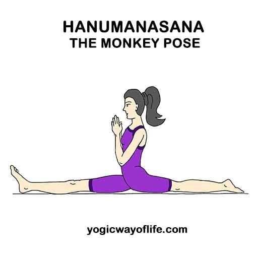 Hanumanasana – The Monkey Pose | Yogic Way Of Life