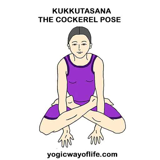 Kukkutasana - Cockerel Pose