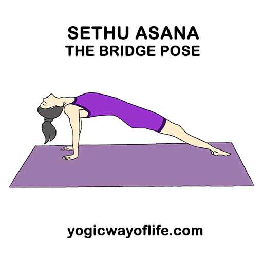 Sethu_Asana_Bridge_Pose_Yoga
