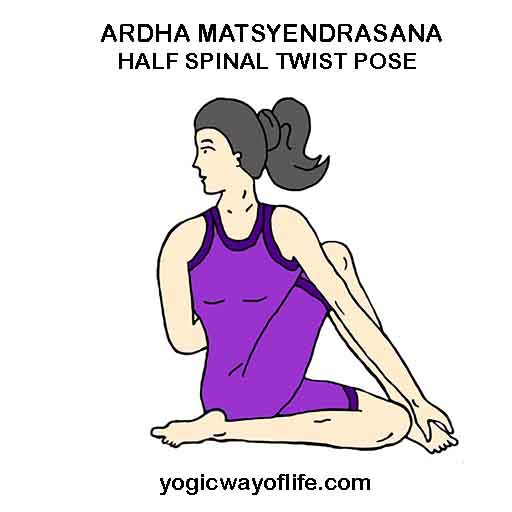 Ardha Matsyendrasana - Half Spinal Twist Pose