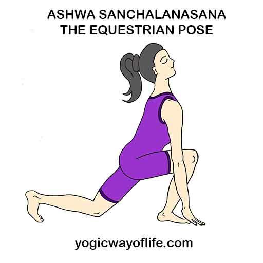 Ashwa Sanchalanasana_Equestrian_Ppose_Yoga_Asana