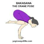 bakasana - Crane Pose