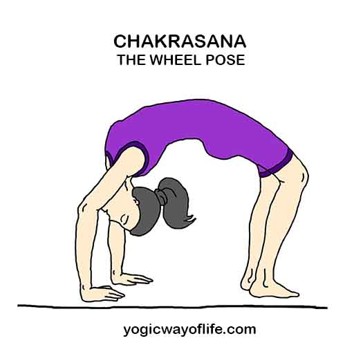Chakrasana The Wheel Pose Asana Yoga