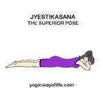 Jyestikasana - Superior Pose