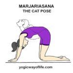 Marjariasana - Cat Pose