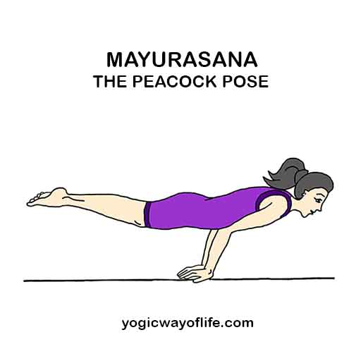 Mayurasana – The Peacock Pose | Yogic Way Of Life