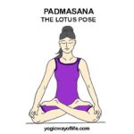 PADMASANA - Lotus Pose