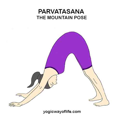 Parvatasana_Mountain_Pose_Yoga_Asana