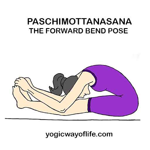 Paschimottanasana - Forward bend Pose