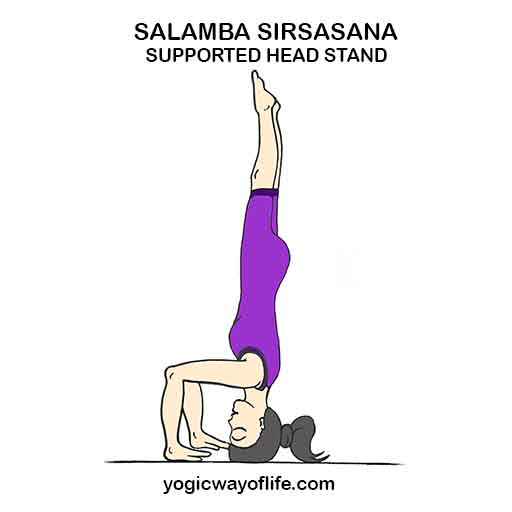 Salamba_Sirsasana_Supported_Head_Stand_Yoga_Pose_Asana