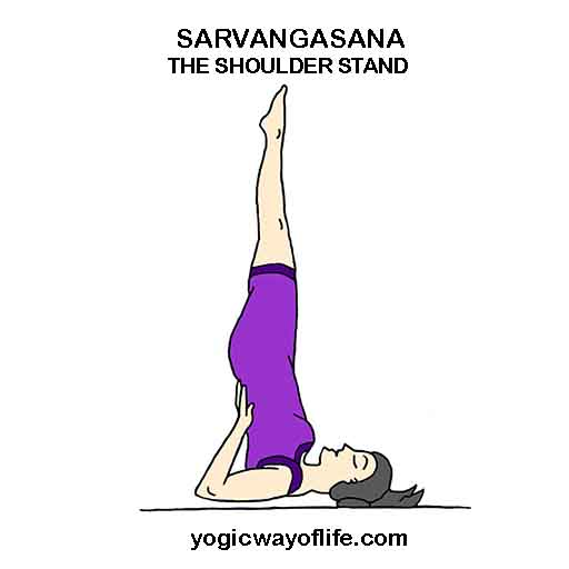 Sarvangasana Shoulder Stand Yoga Pose Asana How To Do Inverted