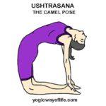 USHTRASANA - Camel Pose