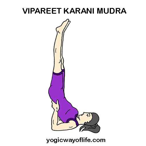 Vipareet_Karani_Mudra_Yoga_Asana_Pose