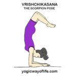 Vrishchikasana - Scorpion Pose