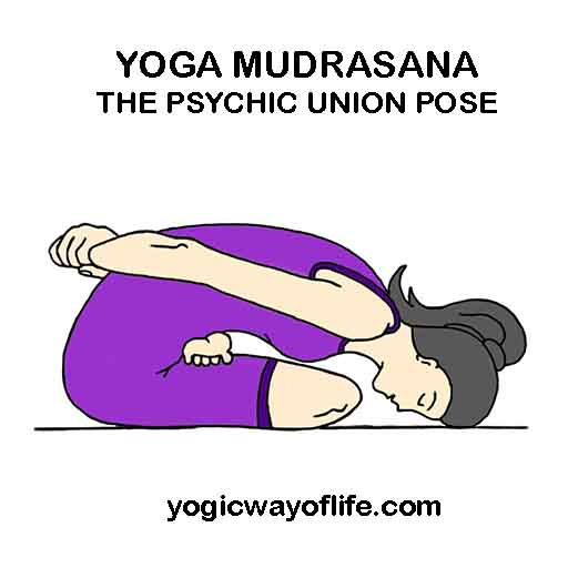 Yoga Mudrasana - Psychic Union Pose