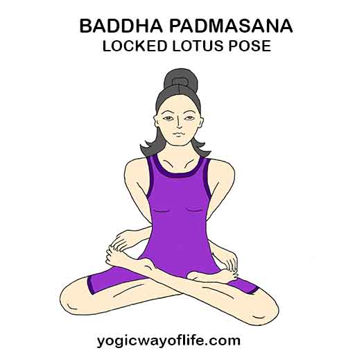 baddha Padmasana - Locked Lotus Pose