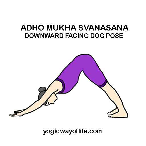 adho_mukha_svanasana_downward_facing_dog_pose_yoga_asana