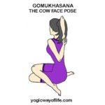 GOMUKHASANA - The Cow Face Pose