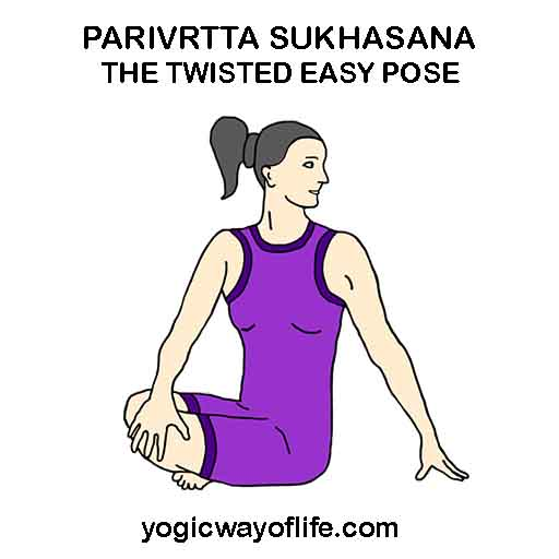 parivrrta_sukhasana_twisted_easy_pose_asana_yoga