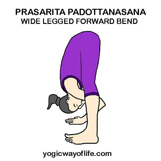 Prasarita Padottanasana - Wide Legged Forward bend