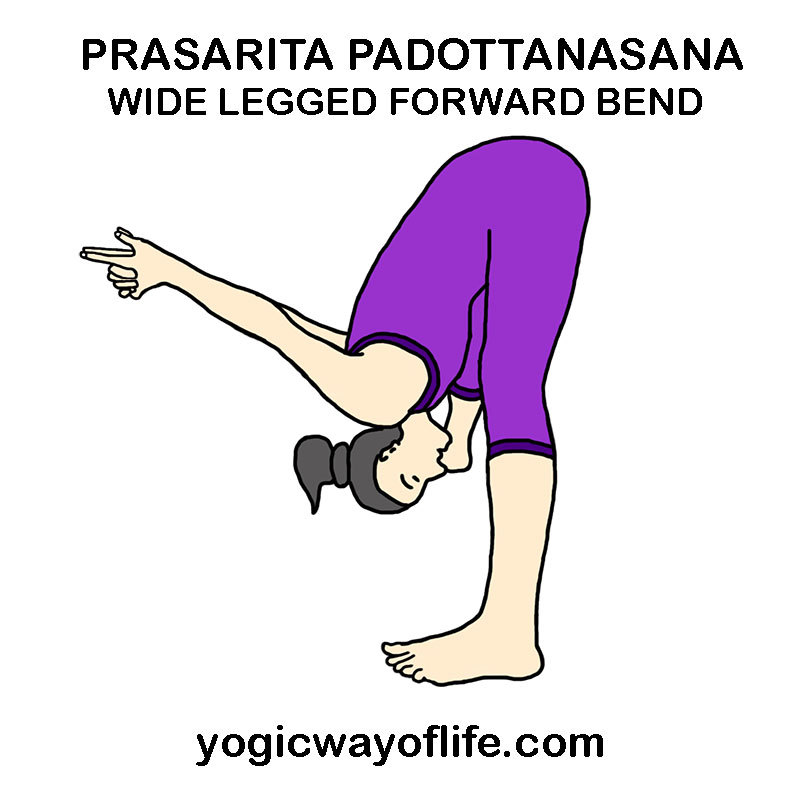 prasarita_padottanasana_wide_legged_forward_bend_pose_yoga_asana_var_2