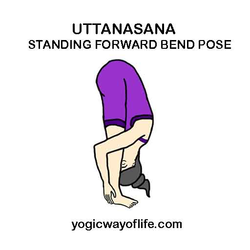 UTTANASANA - Standing forward bend pose