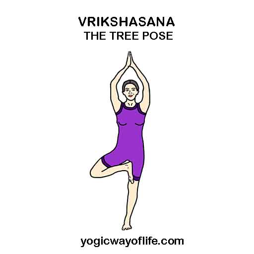 vrikshasana-_tree_pose_yoga_asana