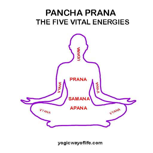 Pancha Prana - The Five Vital Energies