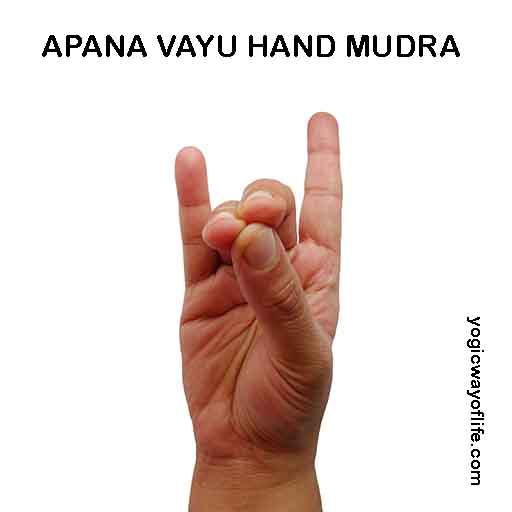 Apana Vayu Hand Mudra