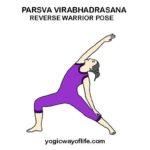 Parsva Virabhadrasana - Reverse Warrior Pose