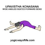 Upavistha Konasana - Wide Angle Seated Forward Bend Pose