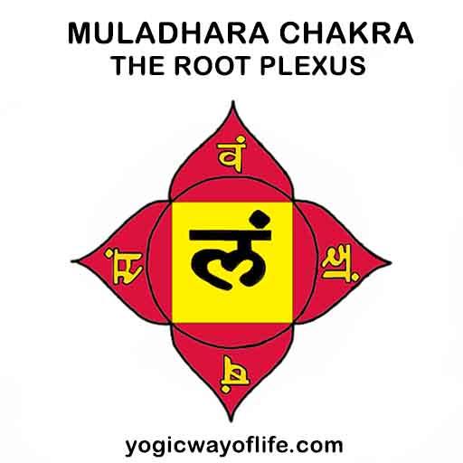 Muladhara Chakra - The Root Plexus - Yogic Way of Life