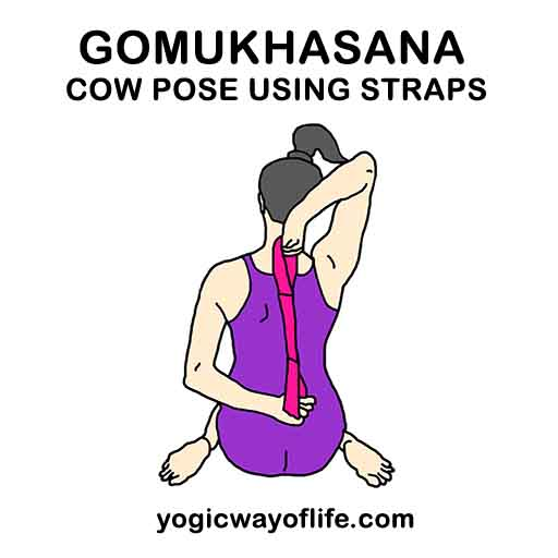 Gomukhasana with Yoga Straps - Cow Pose